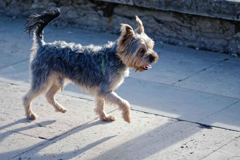 photo of walking on dog